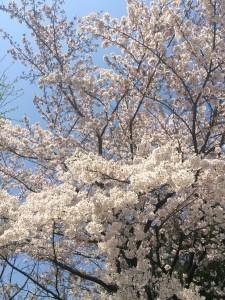 写真 2015-03-30 12 11 55